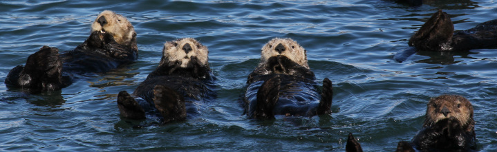 Who We Fund To Help Otters