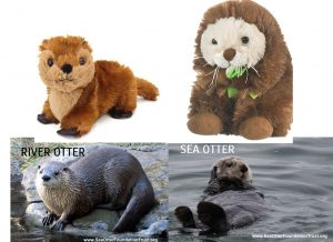 Otter Adoption Sea Otter Foundation Trust