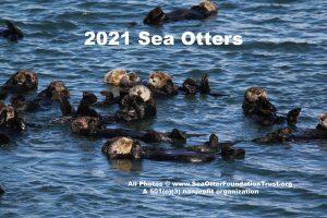 sea otter calendar